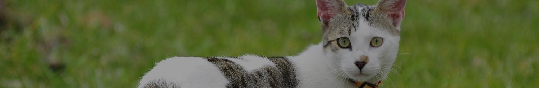 Katten dierenopvang in Overijssel